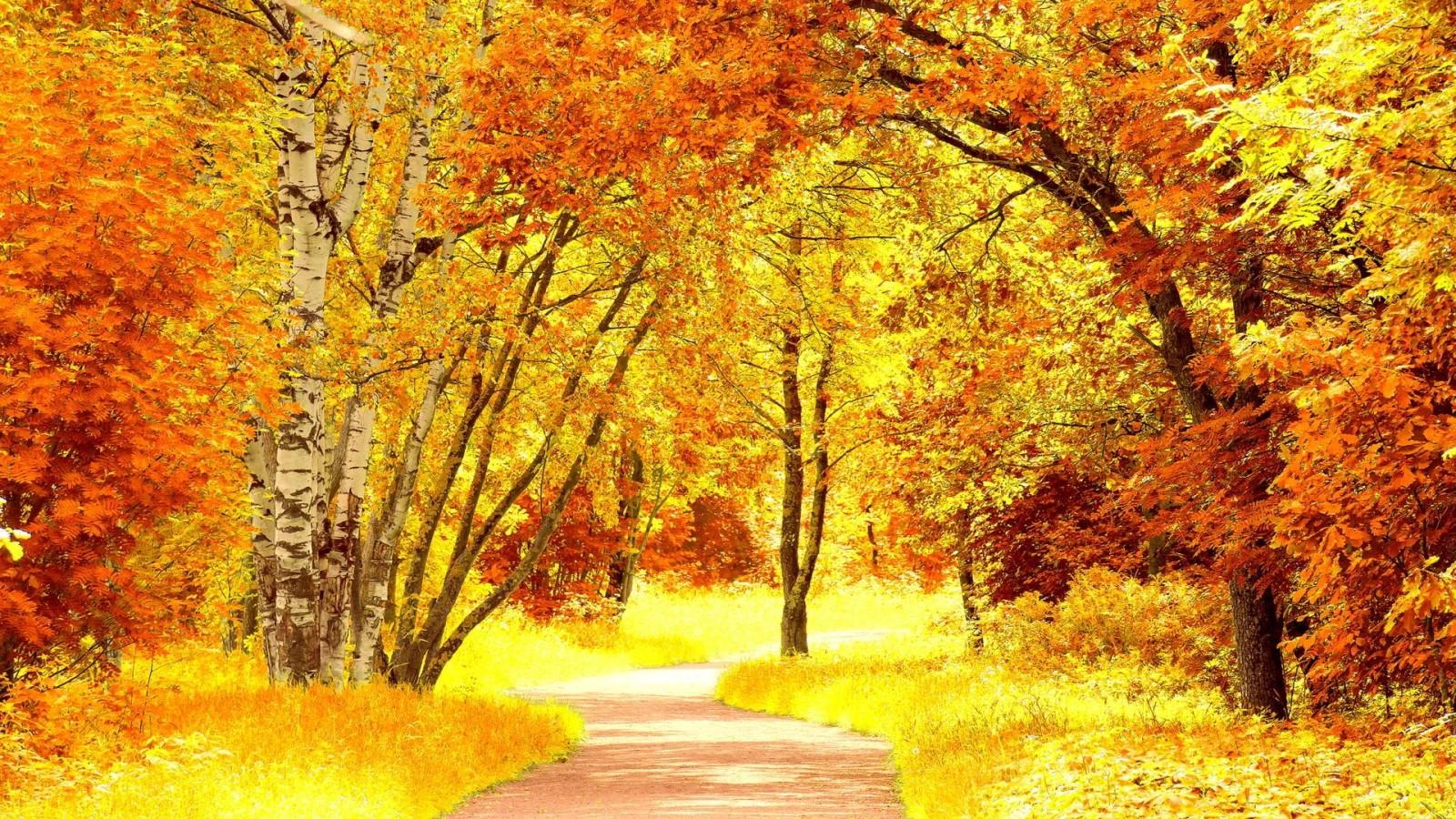 1600-fall-season